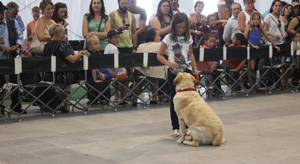 Dos concursantes de obediencia canina