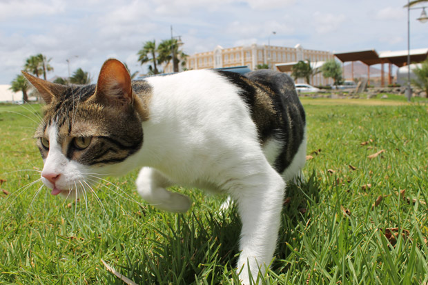 Tom, gato autentico cazador
