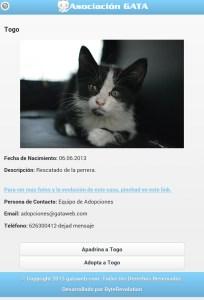 Perfil gatos asociación Gata