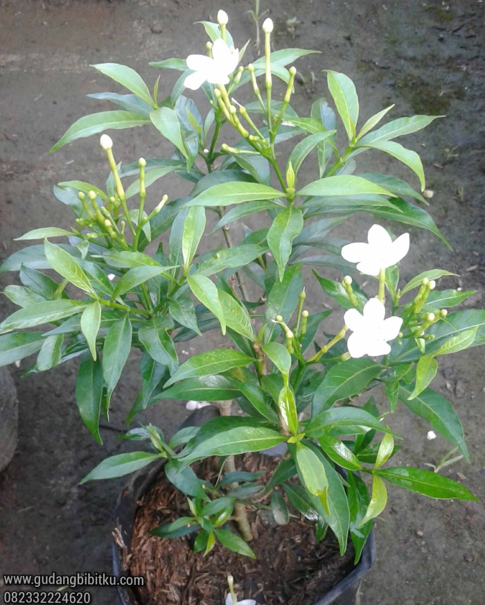 Jenis tanaman outdoor