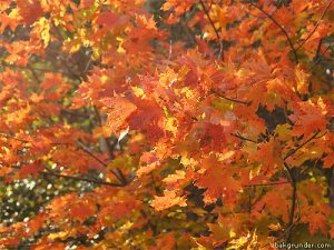fall-3th[1]