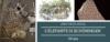 Archeologia: l'elefante di Schöningen