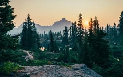 Strategia Forestale Nazionale: cosa non va, e una proposta diversa