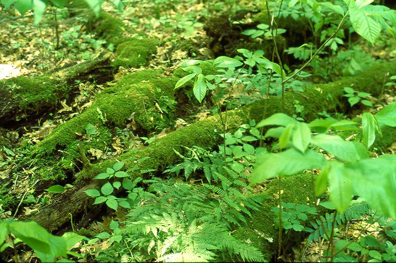 Un bosco abbandonato è un bosco restituito alla natura