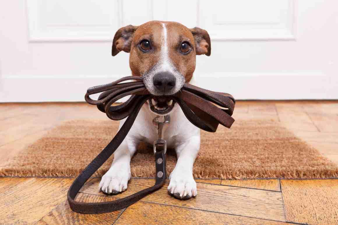Image of dog holding its tab.