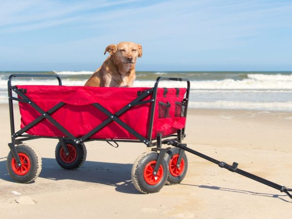 Dog in beach cart