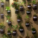 Plantio de hortaliças em pequenos espaços e conscientização do consumo saudável são temas de oficina para adultos