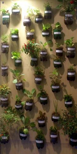 Hortaliças em Pequenos Espaços - Foto: Divulgação