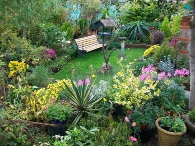 Giardino con vegetazione fitta e rigogliosa