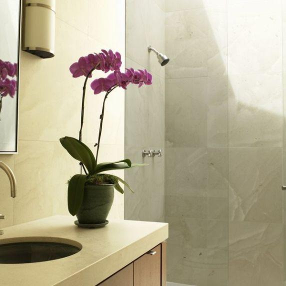un classico intramontabile delle decorazioni verdi da intero: le orchidee