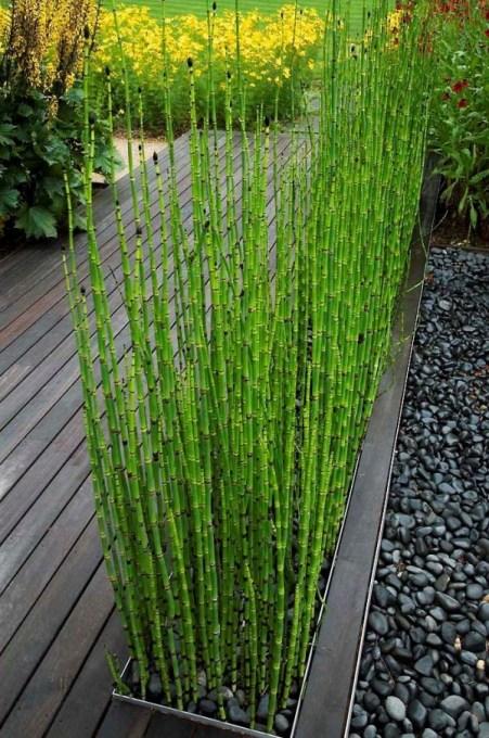 """Le Equisetaceae, conosciute comunemente con il nome di """"code di cavallo"""", sono piante ornamentali perenni di origine molto antica"""