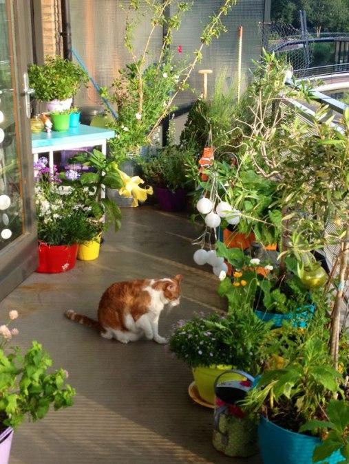 coltivazione sul balcone