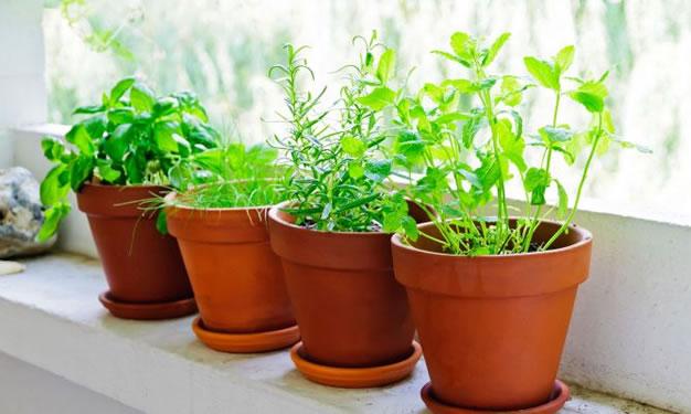 coltivazione delle erbe aromatiche
