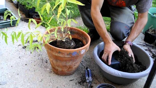 Il trapianto è una delle operazioni di fai da te più comuni per tutti gli amanti del giardinaggio