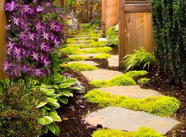 Piante Per Ingresso Buio : Bellissime piante perfette per abbellire il vialetto