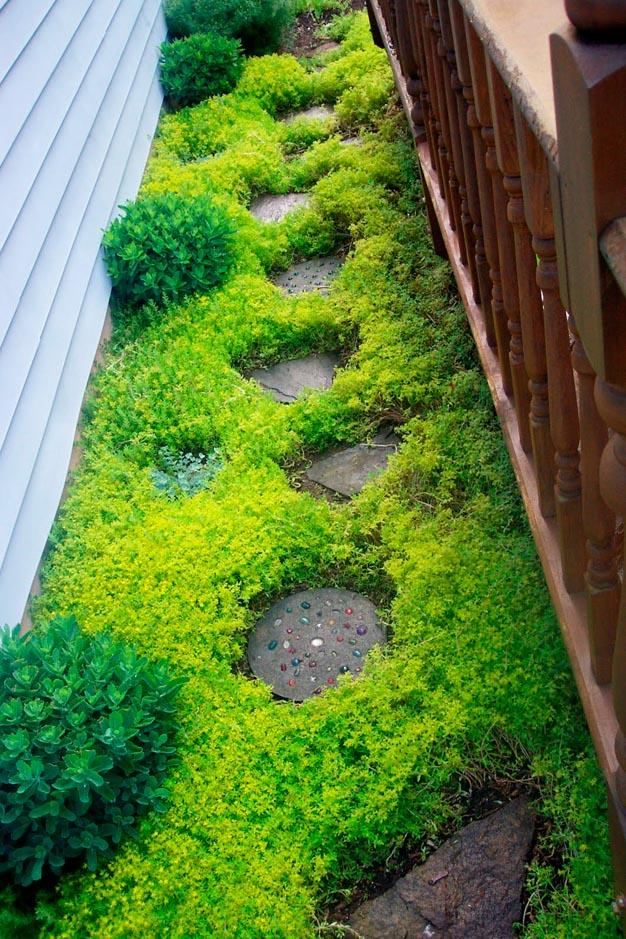Sedum Spurium, una pianta grassa molto utilizzata a scopo decorativo nella creazione dei giardini rocciosi