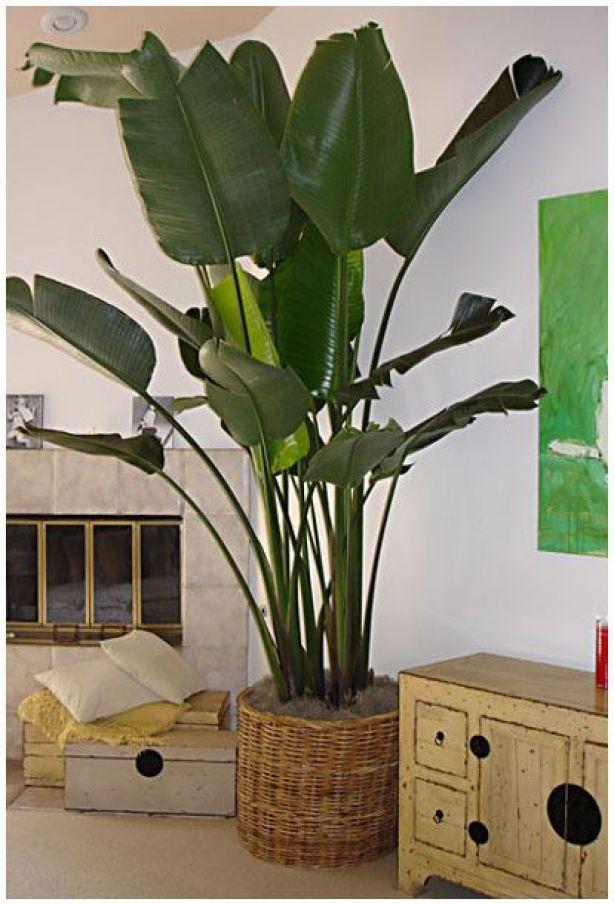 Decorare gli interni con le piante tropicali guida giardino for Piante per interni