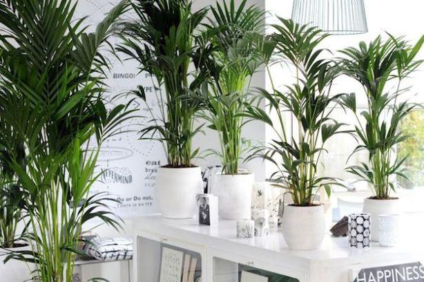 Piante Tropicali Da Appartamento.Decorare Gli Interni Con Le Piante Tropicali Guida Giardino