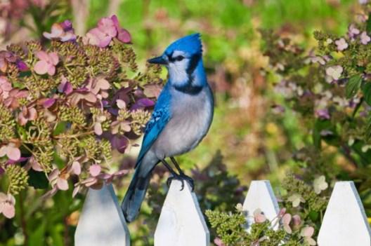 uccellino sulla staccionata