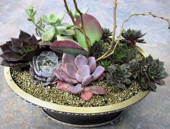 un mini giardino di succulente