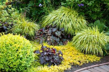 Préférence 7 bellissime piante che crescono in ombra | Guida Giardino PC39
