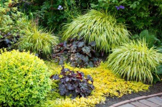 7 bellissime piante che crescono in ombra Guida Giardino