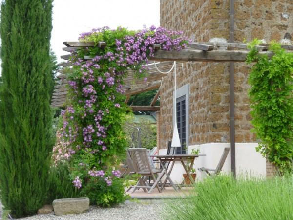 18 piante rampicanti per il pergolato guida giardino - Piante profumate da giardino ...