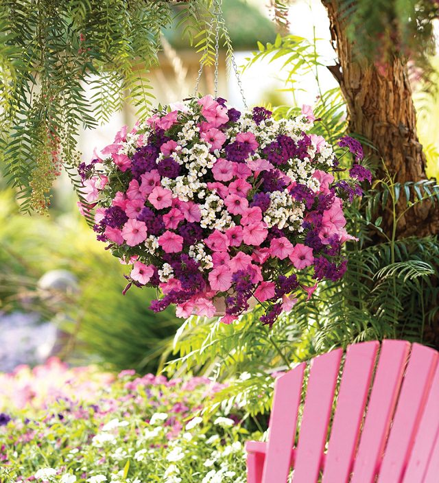 18 piante ideali per la coltivazione in vasi appesi | guida giardino - Fiori Cascanti Crescita Veloce