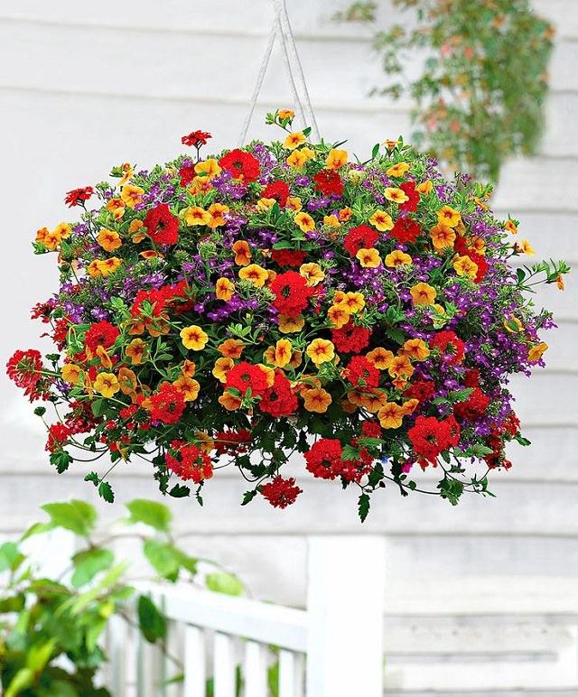 La Calibrachoa è una pianta fiorita molti simile alla Petunia, ma a differenza di questa è più resistente alle condizioni atmosferiche nonché alle malattie fungine