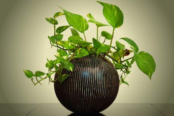 8 piante dappartamento in grado di crescere bene anche in ambienti