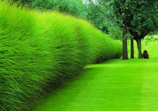 possibilità di giardinaggio alternativo e moderno per sostituire le classiche strutture rigide e compatte che si utilizzano da sempre per separare gli spazi esterni