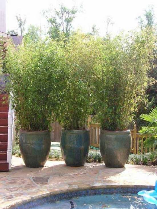 Alcune piante di bambù, coltivate in grandi contenitori, sono una soluzione molto elegante e suggestiva, ottima per separare le diverse zone del giardino