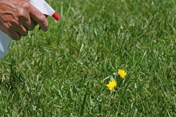 grazie alla presenza dell'acido acetico, l'aceto uccide il fogliame delle piante e aumenta l'acidità del suolo