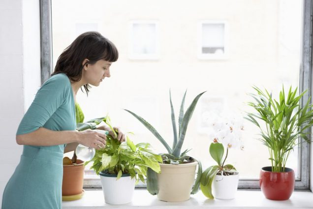 L'irrigazione eccessiva è la principale causa della morte delle piante d'appartamento