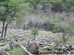 Ushuaia: ¡Más al sur no hay quien viva! - 311206_ushuaia