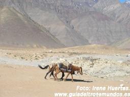 Escapando del monzón: Entre Ladakh y Kashmir - ladakh120807