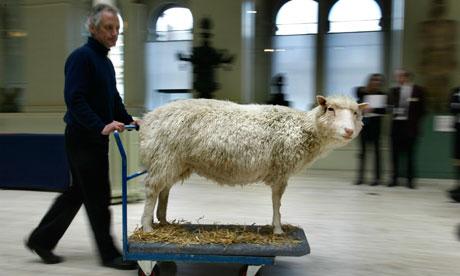 ¿Qué ha sido de la Oveja Dolly? - Dolly-the-sheep-0061