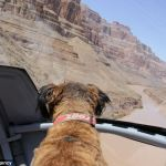 El asombroso viaje de Oscar, el perrito rescatado de la calle - oscar1