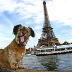 El asombroso viaje de Oscar, el perrito rescatado de la calle - oscar11