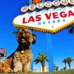 El asombroso viaje de Oscar, el perrito rescatado de la calle - oscar13