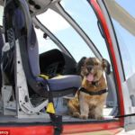 El asombroso viaje de Oscar, el perrito rescatado de la calle - oscar2