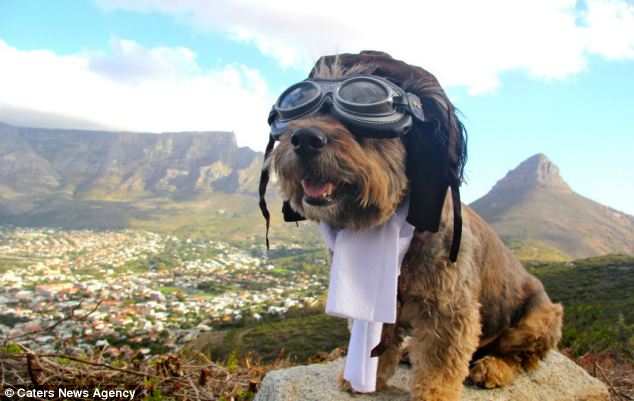 El asombroso viaje de Oscar, el perrito rescatado de la calle - oscar3