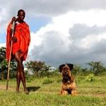 El asombroso viaje de Oscar, el perrito rescatado de la calle - oscar8
