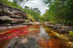 El río más hermoso del mundo, o el arco iris que se derritió - cano-cristales-8-thumb