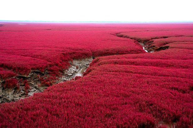El Libro Rojo vale, pero… ¿la Playa Roja?