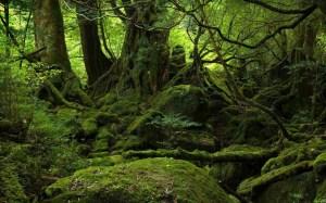 Yakushima, naturaleza y futuro unidos en la esperanza - Yakushima-Island1-300x187