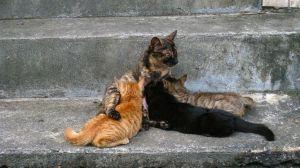 Houtong: el barrio de los gatos en Taiwán - houtong-1-300x168