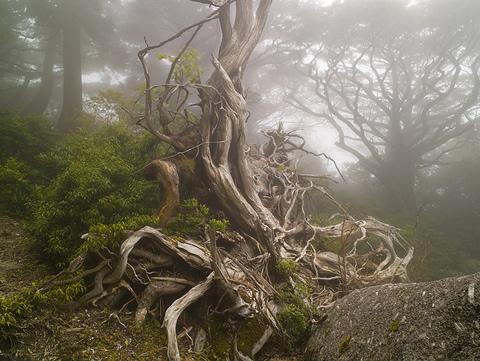 Yakushima, naturaleza y futuro unidos en la esperanza
