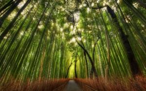 El bosque de bambú - bosque-bambu-1-300x187