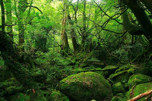 Brocelandia, el bosque encantado